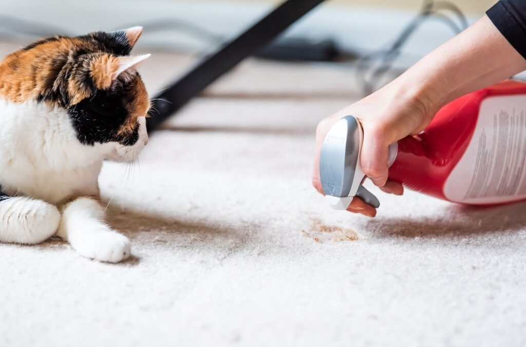 How Carpet Cleaning Removes Stains And Odor